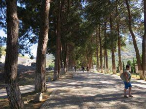 jalan rindang menuju situs Ephesus