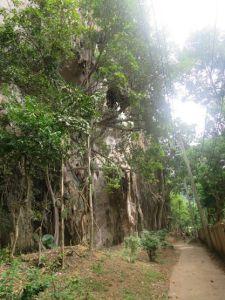 a walk to the jungle
