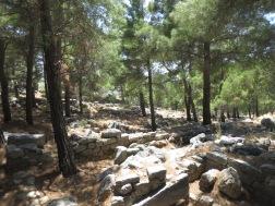 Reruntuhan kota Priene terletak di hutan pinus yang menambah kesan misterius kota ini