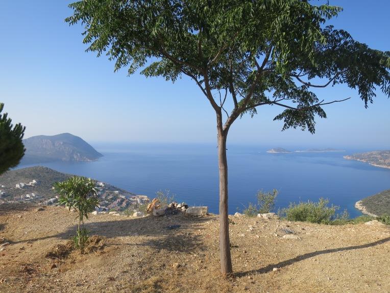 Solitary tree overlooking Kalkan