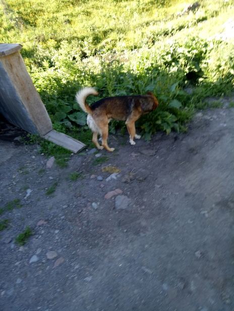 Mr Doggie yang menjadi penunjuk jalan kami awal2 trekking