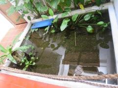 kolam ikan biar adem